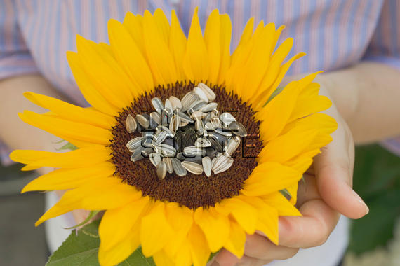 Sunflower seeds nutrition facts