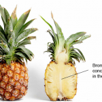 Bromelain in Pineapple